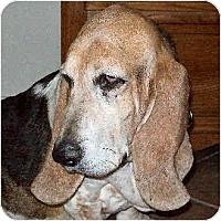 Adopt A Pet :: Monique - Phoenix, AZ