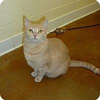 Adopt A Pet :: Nanashi - Lake Charles, LA