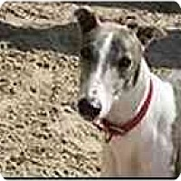 Adopt A Pet :: Chuck - St Petersburg, FL