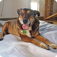Adopt A Pet :: Lizzie - Petaluma, CA