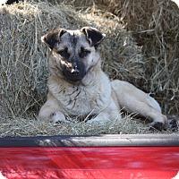 Adopt A Pet :: Josie - Williston, FL