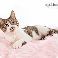 Adopt A Pet :: Belle - Eagan, MN