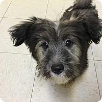 Adopt A Pet :: CoCo - Fullerton, CA