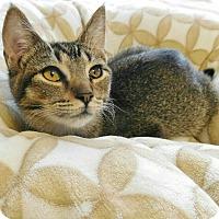 Adopt A Pet :: Kai - Davis, CA