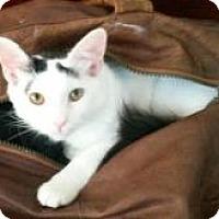 Adopt A Pet :: Violet - Mission Viejo, CA