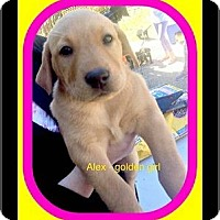 Adopt A Pet :: Alex - Milton, GA