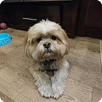 Adopt A Pet :: Tiny - Las Vegas, NV