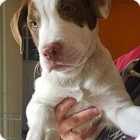 Adopt A Pet :: Dean - Hammonton, NJ