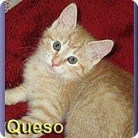 Adopt A Pet :: Queso - Aldie, VA