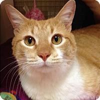 Adopt A Pet :: Stewie - LaGrange Park, IL