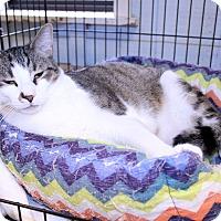 Adopt A Pet :: Augusta - Lumberton, NC