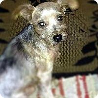 Adopt A Pet :: Max - Goodyear, AZ