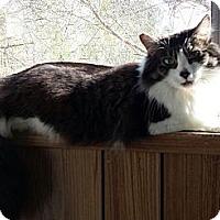 Adopt A Pet :: Silvio - Santa Monica, CA