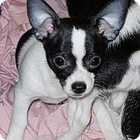 Adopt A Pet :: Black Bart - Oklahoma City, OK