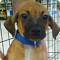 Adopt A Pet :: Jolly - Phoenix, AZ