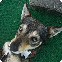 Adopt A Pet :: KIWI @ Petsmart in SLO 11/29 - Atascadero, CA