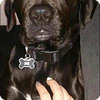 Adopt A Pet :: Luke - Quinlan, TX