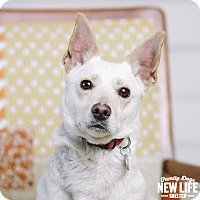 Adopt A Pet :: Loquita - Portland, OR