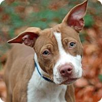 Adopt A Pet :: Dee-Dee - Port Washington, NY