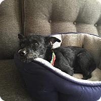 Adopt A Pet :: Joshua - San Diego, CA