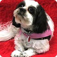Adopt A Pet :: MAGGIE - Eden Prairie, MN