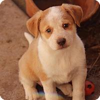 Adopt A Pet :: Twix - Phoenix, AZ