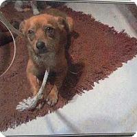 Adopt A Pet :: Kahlua - Encino, CA