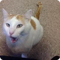Adopt A Pet :: Brandon - Byron Center, MI