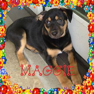 Siberian Husky/English Shepherd Mix Dog for adoption in Houston, Texas - Maggi