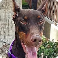 Adopt A Pet :: Clark - Las Vegas, NV