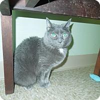 Adopt A Pet :: Mindy - Medina, OH