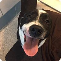 Adopt A Pet :: Cadbury - Prince George, VA
