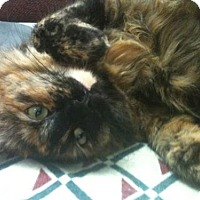 Adopt A Pet :: Lucy - Springfield, OR