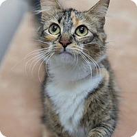Adopt A Pet :: Mitzy - Merrifield, VA