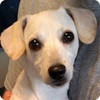 Adopt A Pet :: Gracie - Homewood, AL