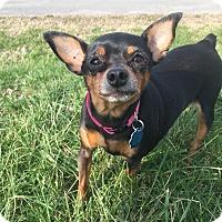 Adopt A Pet :: Abby (ETAA) - Harrisonburg, VA