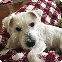 Adopt A Pet :: Wesley - Homewood, AL