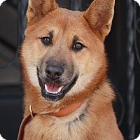 Adopt A Pet :: Willow von Winola - Los Angeles, CA