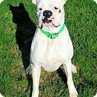 Adopt A Pet :: Edwin - Shreveport, LA