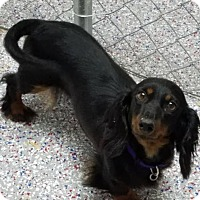 Adopt A Pet :: Liberty in TN - Columbia, TN