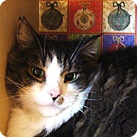 Adopt A Pet :: Andy - Albany, NY
