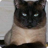 Adopt A Pet :: Mr.Bigglesworth & Harpo - San Luis Obispo, CA