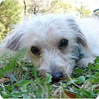 Adopt A Pet :: Merlin - Mocksville, NC