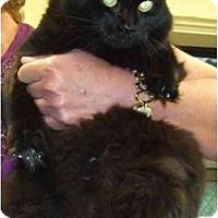 Adopt A Pet :: Budda - Lake Charles, LA