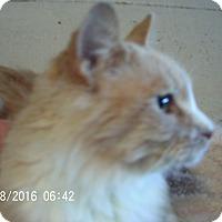 Adopt A Pet :: Max - Bridgeton, MO