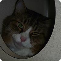 Adopt A Pet :: Johnny - Hamburg, NY