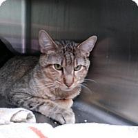 Adopt A Pet :: Del - Warwick, RI