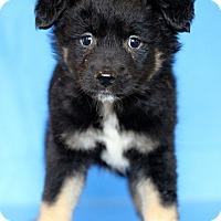 Adopt A Pet :: New Jersey - Waldorf, MD
