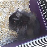 Adopt A Pet :: Jupiter - Seattle, WA