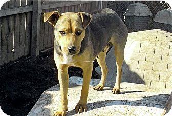 German Shepherd Dog Mix Dog for adoption in Moulton, Alabama - Gretal